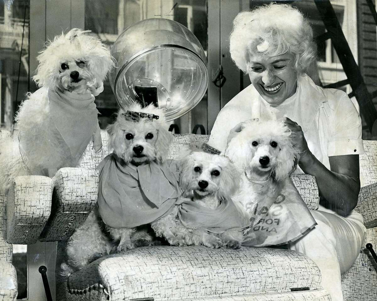 Click through this gallery for some of the cutest pups in the Chronicle archive. K C Circus, with Jeannine Piroteau and her poodles, Bunny, Sputnik, Pernod and Petite, June 2, 1960.