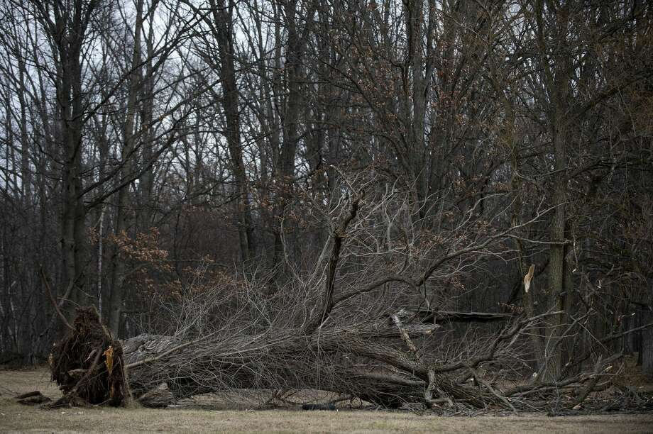 FILE — A fallen tree lays in the yard of a home on North Saginaw Road in Jerome Township. Photo: Brittney Lohmiller/Midland Daily News/Brittney Lohmiller