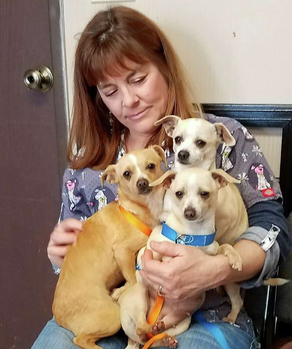 Veterinarian Kelly Palm with some of the rescued Chihuahuas.
