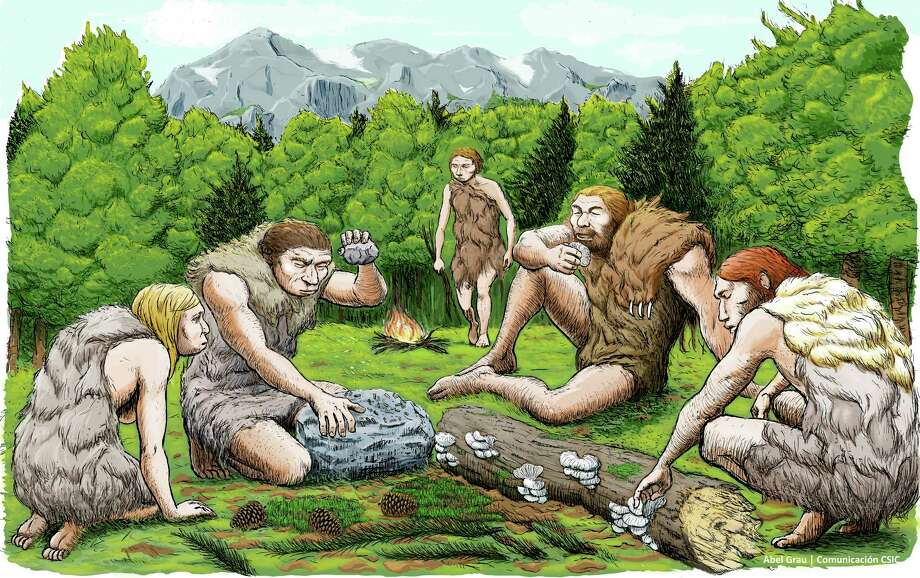 This drawing provided by Abel Grau Guerrero shows  mostly vegetarian  Spanish Neanderthals munched on mushrooms, pine nuts and moss. Scientists got a sneak peek into the kitchen and medicine cabinets of three Neanderthals by examining the DNA of the stuff stuck on and between their teeth. What they found smashes a common meaty misconception of the caveman diet and hints that one sickly Neanderthal had found what may be primitive versions of penicillin and aspirin to help him with his pain. (Abel Grau Guerrero via AP) Photo: HONS / Abel Grau Guerrero