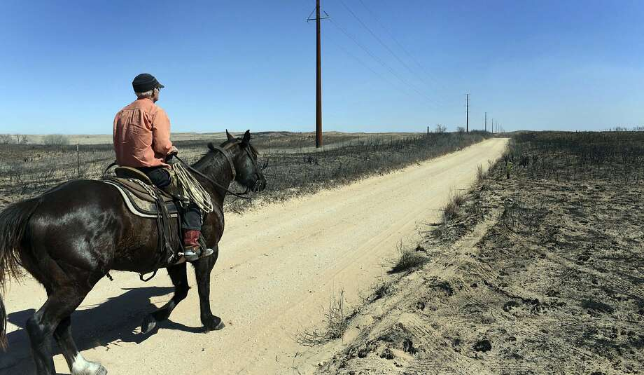 David Crockett, grandfather of the Cody Crockett who died in Monday's wildfires, rides the scorched prairie of Franklin Ranch searching for injured cattle Tuesday, March 7, 2017 after wildfires raced across Gray County, Texas driven by 50 mph winds. Crockett said his grandson and friends got caught in a wild shift the blew the fire back on them, trapping them while herding cattle in a sandy dunes area of the ranch. Cody Crockett, Sydney Wallace and Sloan Everett lost their lives in the wildfires. (Michael Schumacher/The Amarillo Globe News via AP) Photo: Michael Schumacher, Associated Press