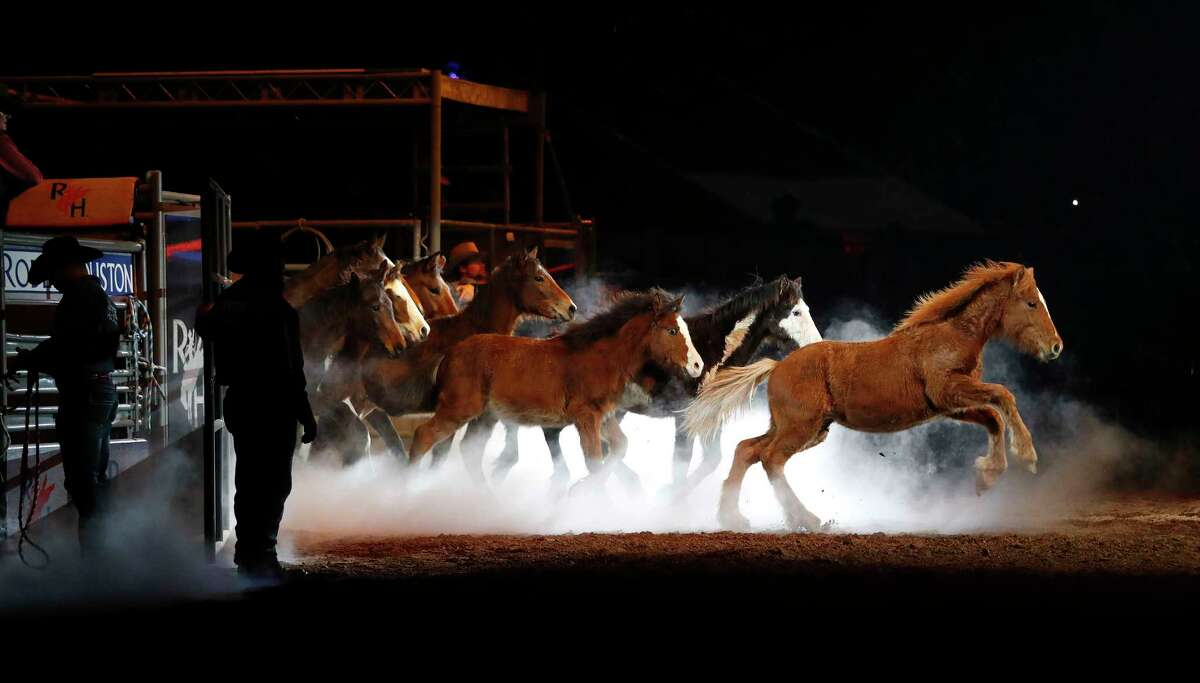 """Bucking horses run onto the dirt as the recently retired 20-year-old bucking horse """"Hostage"""" was honored at the Houston Livestock Show and Rodeo, at NRG Park, Wednesday, March 8, 2017, in Houston."""
