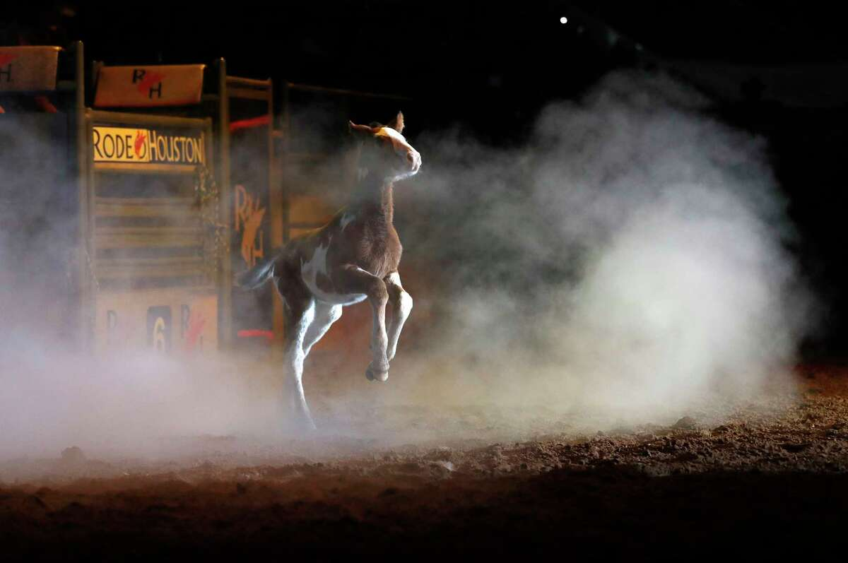 """Little """"Painted Hostage, daughter of the recently retired, 20-year-old bucking horse """"Hostage"""", from the Cervi Championship Rodeo stock contractor, runs through the smoke as her mother was honored at the Houston Livestock Show and Rodeo, at NRG Park, Wednesday, March 8, 2017, in Houston."""