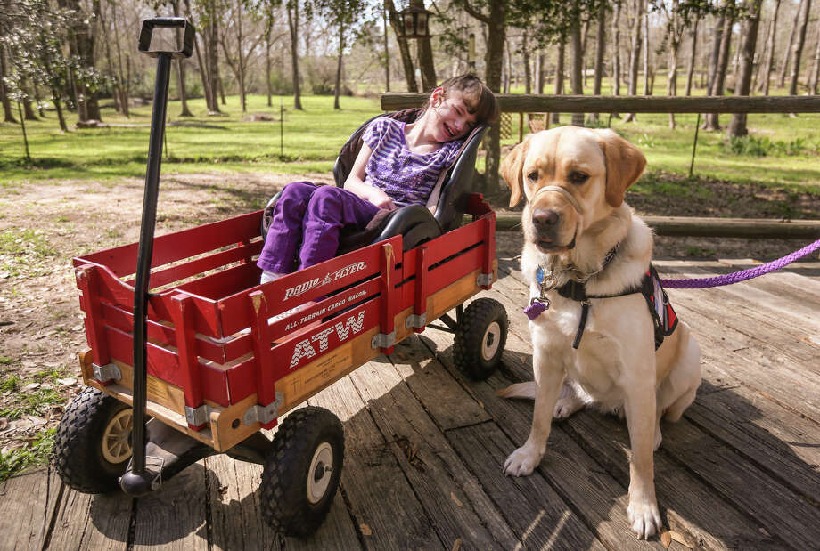 Madison Rice, 9, and her one-year-old service dog Priscilla pose for a photo on Friday, March, 3, 2017, at her family's home in Willis. Photo: Michael Minasi, Staff Photographer / © 2017 Houston Chronicle