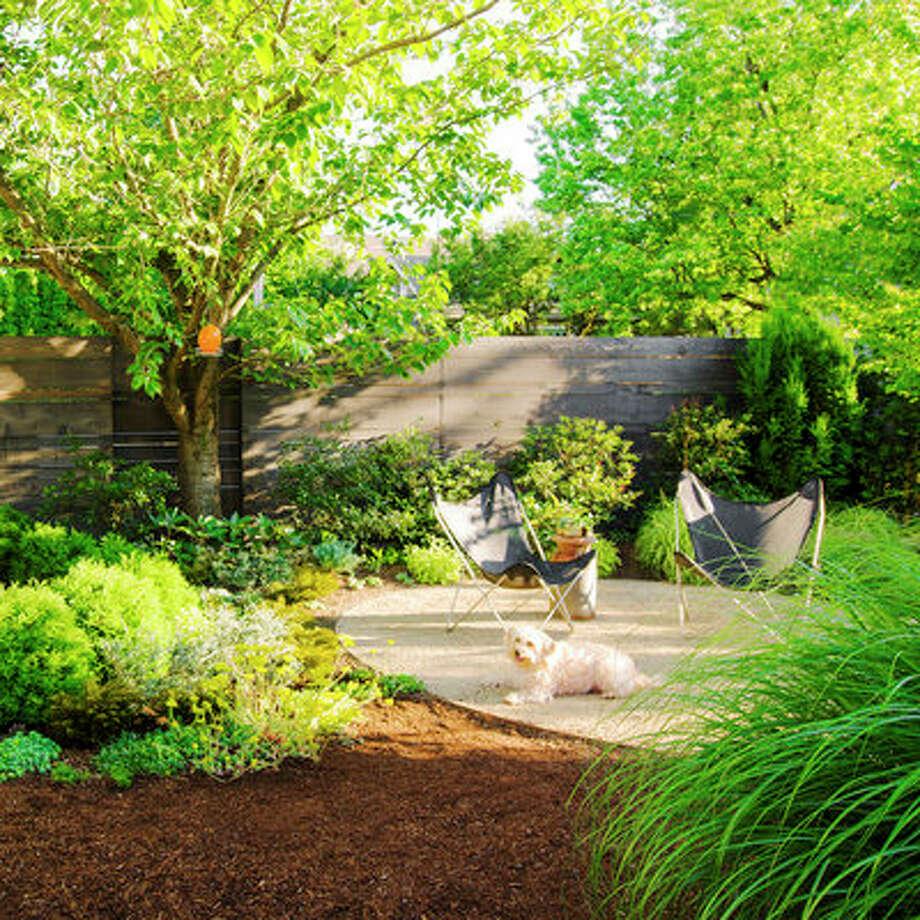 Small Backyard Ideas Dogs: How To Create A Dog-friendly Garden
