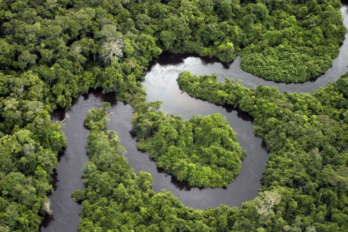 Amazon is the largest rainforest in the world with the most diverse species population, but expansion of agriculture could lead to the destruction of the rainforest.