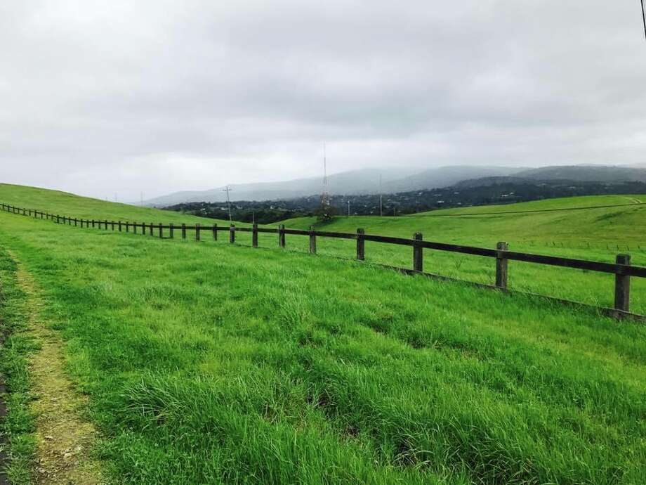 The grass glows green along the Dish Loop Trail on the Stanford campus in Palo Alto, Calif., on March 2017. Photo: Poorty Chitre Vaidya