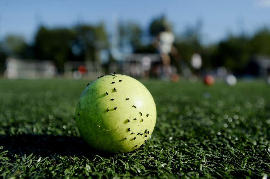 Crumb rubber, used to fill in between the blades of artificial turf, is made from recycled tires, which can be toxic. Photo: Portland Press Herald/Press Herald Via Getty Images