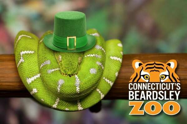 March is one of the busiest times at Connecticut's Beardsley Zoo in Bridgeport. Kids who wear green socks on St. Patrick's Day will be admitted free of charge with a paying adult.