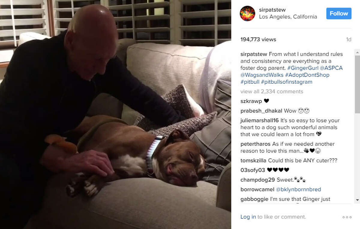 Patrick Stewart and his wife welcomed their foster pup, Ginger, into their home on Wednesday, and the love has been nonstop since.Photo:Patrick Stewart Instagram