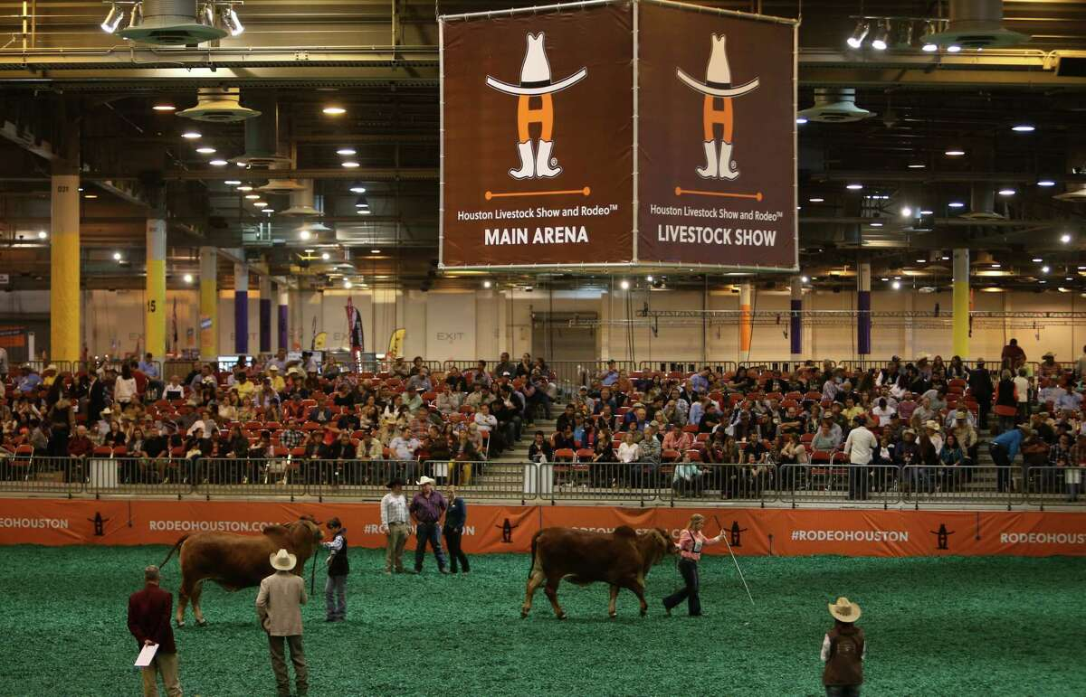 Brahman bulls are lined up during a show at NRG Center, Thursday, March 9, 2017, in Houston.
