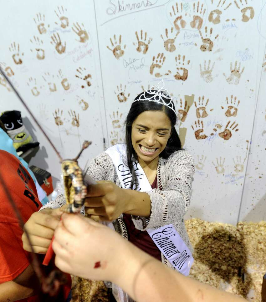 Miss Snake Charmer 2017, Annaliese Espinoza, 17, skins a snake during the 59th annual World's Largest Rattlesnake Roundup on Saturday, March 11, 2017, at the Nolan County Coliseum in Sweetwater, Texas.(Tommy Metthe/The Abilene Reporter-News via AP)