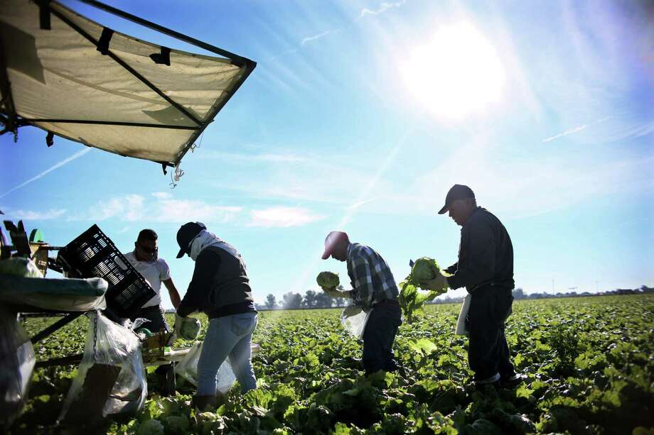 """They say … we're taking work away from Americans,"" says José, a farmworker. ""But work we have plenty of. They should come down here, and help us do some of it."" Photo: Sandy Huffaker /Getty Images / AFP or licensors"