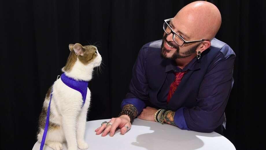 39 catpreneurs 39 unite at new york 39 s first 39 cat camp for Jackson cat whisperer