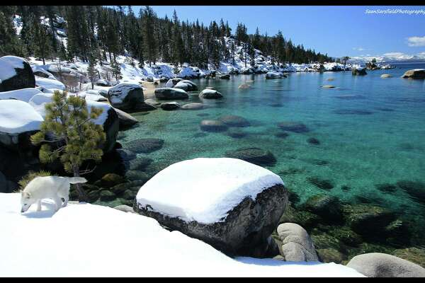 "Tahoe resident and photographer  Sean Sarsfield  captured the beauty of Lake Tahoe in March 2017. ""It was an amazing day with hours spent seeking out light and shadow in the pristine wildness by her shores,"" wrote Sarsfield."