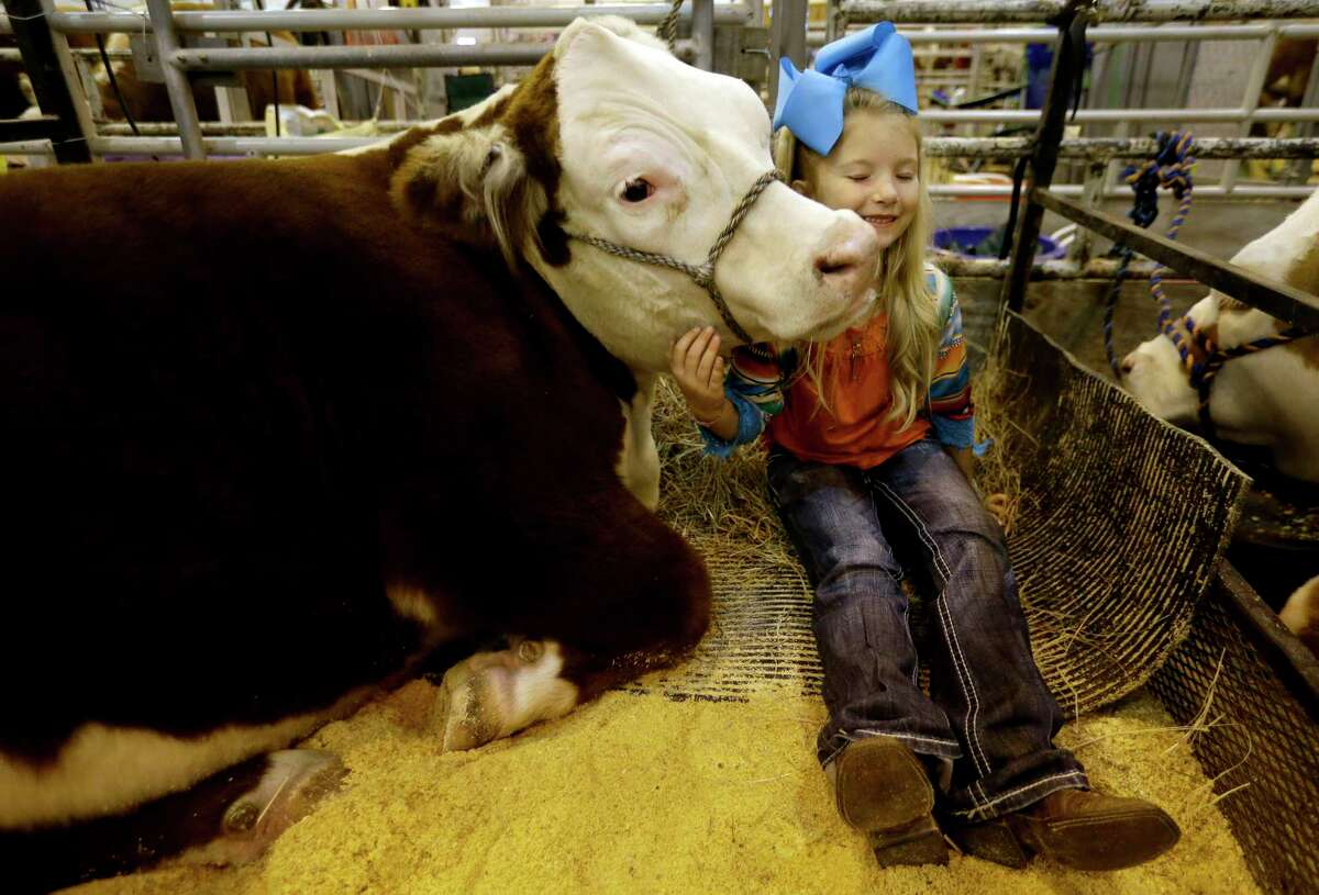 Libbi Poad, 6, of Cisco talks about Miniature Hereford named Rocket that she will show during the Houston Livestock Shown and Rodeo at NRG Center, Monday, March 13, 2017, in Houston. Rocket weighs 922 pounds and Libbi weighs 57 pounds.