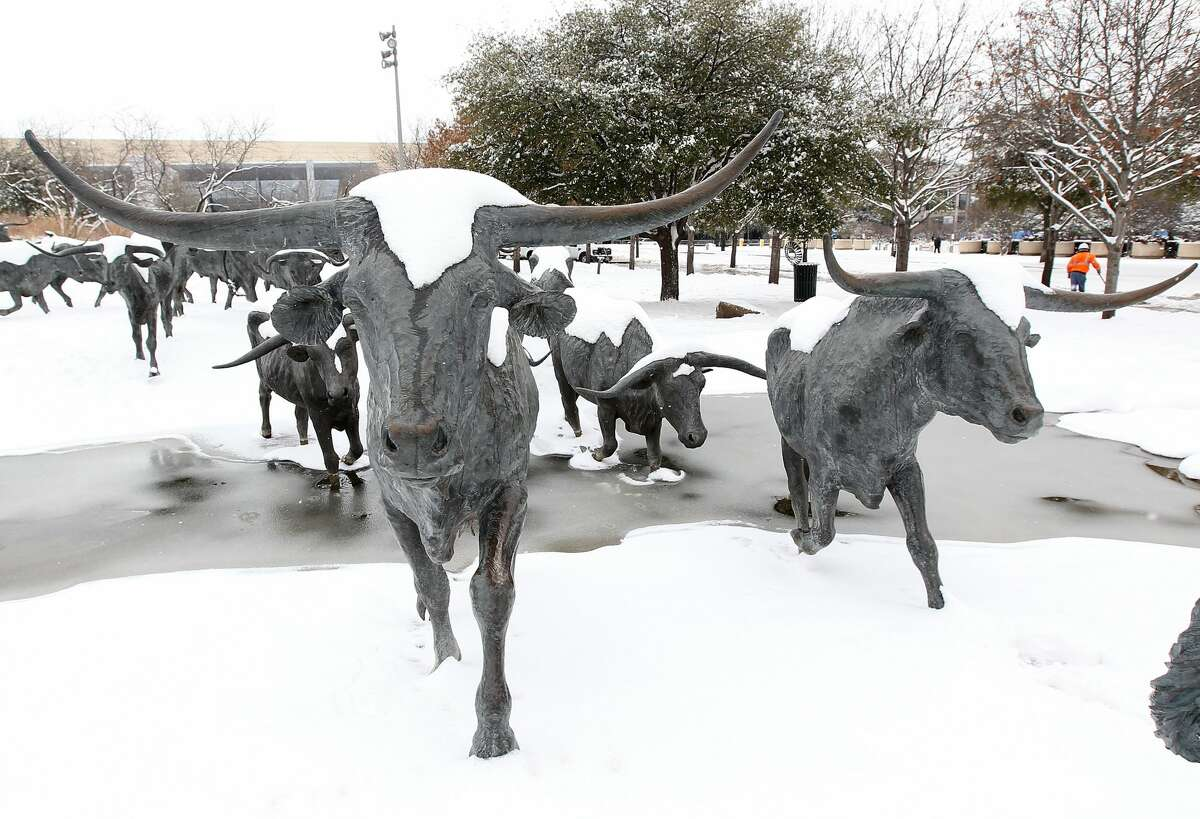 Statues of steer are covered in snow after a snowstorm hit the Dallas area February 4, 2011 in Dallas, Texas. More than four inches of snow fell overnight in the North Texas area. The Green Bay Packers will play the Pittsburgh Steelers in Super Bowl XLV on February 6, 2011 at Cowboys Stadium in Arlington, Texas.