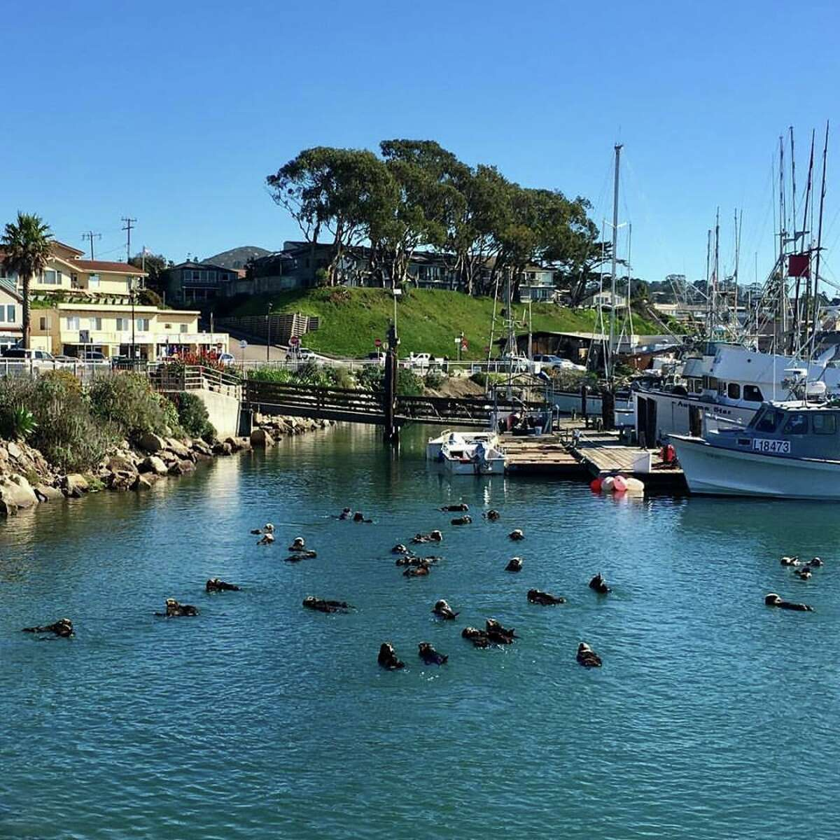 Last year saw a record number of sea otters flock to Morro Bay, with scientists estimating about 30-40 adults and up to 20 pups settled around the embarcadero T-piers in pupping season. The best spot to see the animals, according to Marine Mammal Center veterinarian Cara Field, is the harbor near Morro Rock.