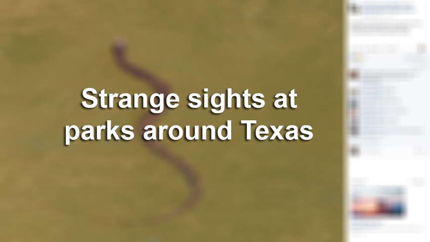 Click ahead for more strange sightings seen at Texas parks.