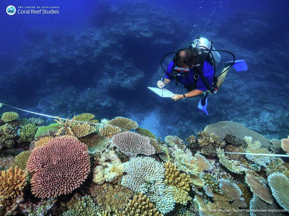Scientists believe that Australia's $2 billion plan to save the Great Barrier Reef won't work without addressing climate change.Click through to see whichTexas cities that will gain, lose residents fleeing from global warming. Photo: Tane Sinclair-Taylor, HONS / ARC Center of Excellence