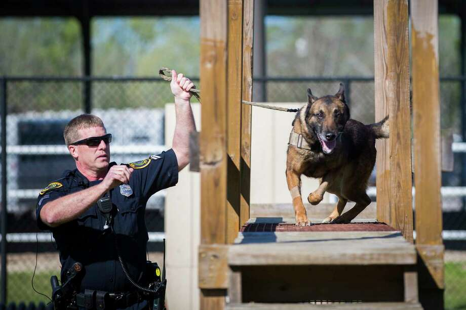 Houston Police Department K-9 Jake runs an obstacle course with his handler the HPD senior police officer Brian Schmidt, Wednesday, March 15, 2017, in Houston. Jake has fully recuperated from his wounds after he was hurt during an incident on which HPD officers pursued possible robbery suspects on Feb. 22, 2017. Photo: Marie D. De Jesus, Houston Chronicle / © 2017 Houston Chronicle