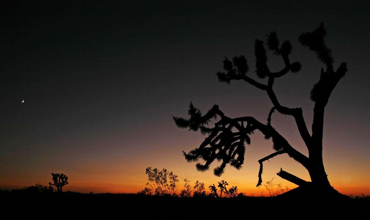 A Joshua tree frames the vast landscape of the Mojave National Preserve near Kelso, California off Cima Road September 4, 2008.