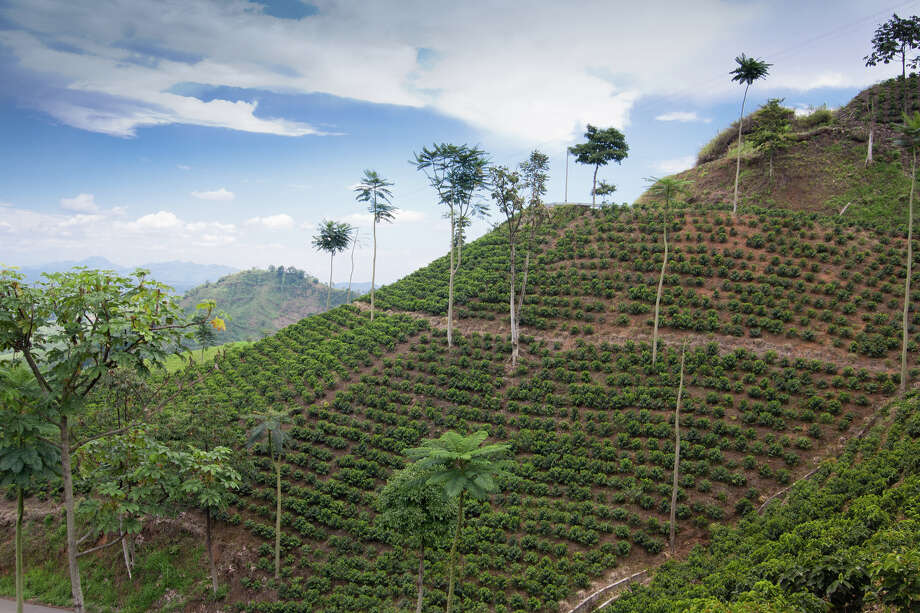 The UNESCO recognised landscape of Colombia's coffee zone. This coffee plantation is located on Via Marsella between the cities of Pereira and Marsella. It is typical of the landscapes of the area. Photo: The Colombian Way Ltda / © The Colombian Way