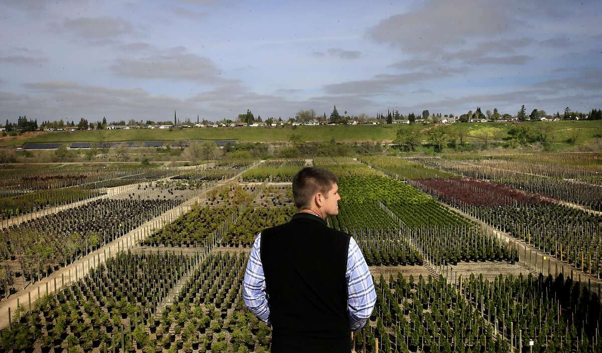 Michael Franz owner of Franz Wholesale Nursery looks out across his nursery along the Tuolumne River, in Hickman, Ca. on Thurs. March 16, 2017. Franz a member of the board of directors on the Turlock Irrigation District oppose the state's proposal to keep more water flowing in the Tuolumne River and other California rivers to help the fish and their natural habitat but he and his district support an alternative plan that preserves water for agriculture while still protecting fish.