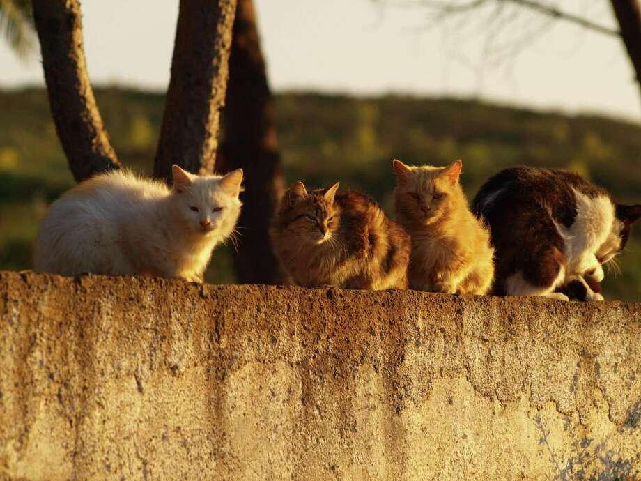 Homeless felines are a community problem requiring community solutions. Photo: Dany Poetry / EyeEm /Getty Images / This content is subject to copyright.