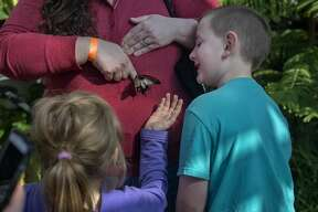 Kathleen Miller tries to get a great yellow Mormon to move onto her finger while Isabella Price, 7, and Viktor Miller, 6, all of Caro watch during a field trip to the Dow Gardens' conservatory Wednesday afternoon. The Butterflies in Bloom exhibit at Dow Gardens is open through April 16 from 10 a.m. to 4 p.m. Between 60-70 different species of butterflies are one display at the conservatory.