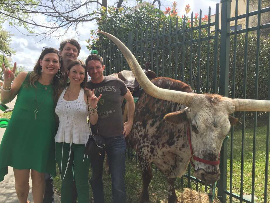 Pimlico Irish pub on Waugh has trucked in two longhorns from La Grange to celebrate three years in Houston with a Texan-Irish St. Patrick's Day. Photo: Jaimy Jones/Houston Chronicle