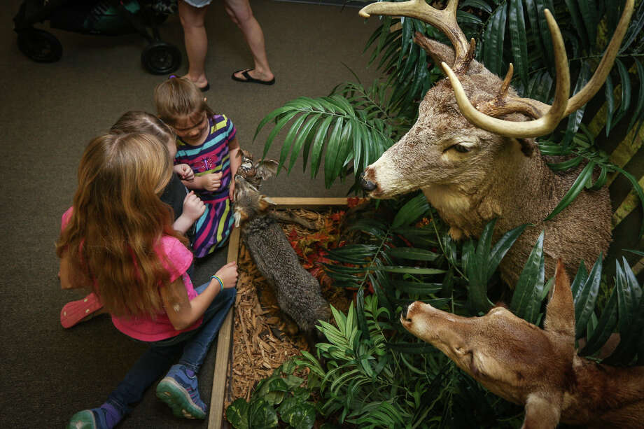 Khyla Shaw, 5, Hannah Telshow, 6, and RandiLeigh Stripling, 9, touch various stuffed wildlife during the open house grand opening on Friday, March 17, 2017, at the Friends of Texas Wildlife's new educational visitor's center. Photo: Michael Minasi, Staff Photographer / © 2017 Houston Chronicle