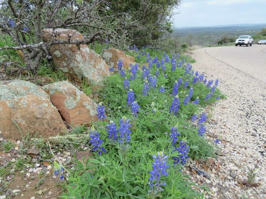 Willow City Loop, north of Fredericksburg, on Friday, March 17. Bluebonnets are scattered along the roadside on this popular scenic drive. Photo: Terry Scott Bertling / San Antonio Express-News