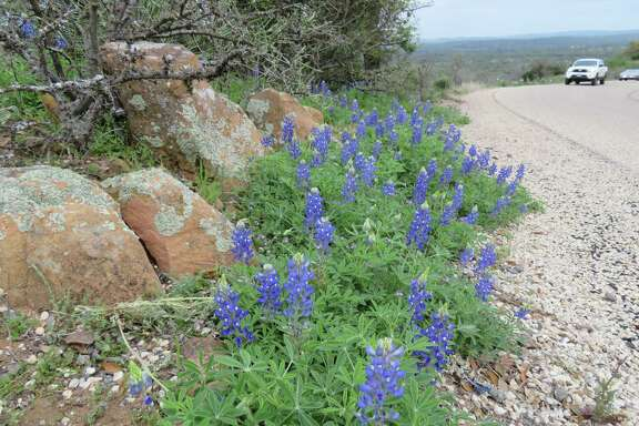 Willow City Loop, north of Fredericksburg, on Friday, March 17. Bluebonnets are scattered along the roadside on this popular scenic drive.
