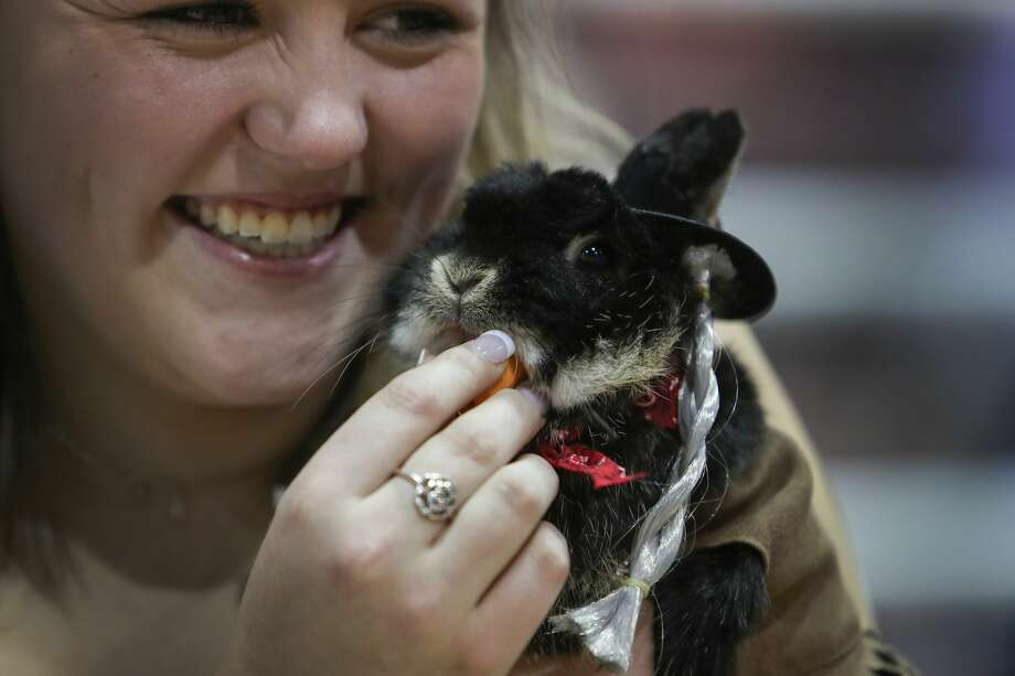 "Grace Cantrell gives some love to her Netherland Dwarf rabbit ""Herbert"" who was dressed as ""Willie Nelson"" during the Rabbit and Cavy Costume Contest in NRG Arena Saturday, March 18, 2017, in Houston. ( Steve Gonzales  / Houston Chronicle ) Photo: Steve Gonzales/Houston Chronicle"