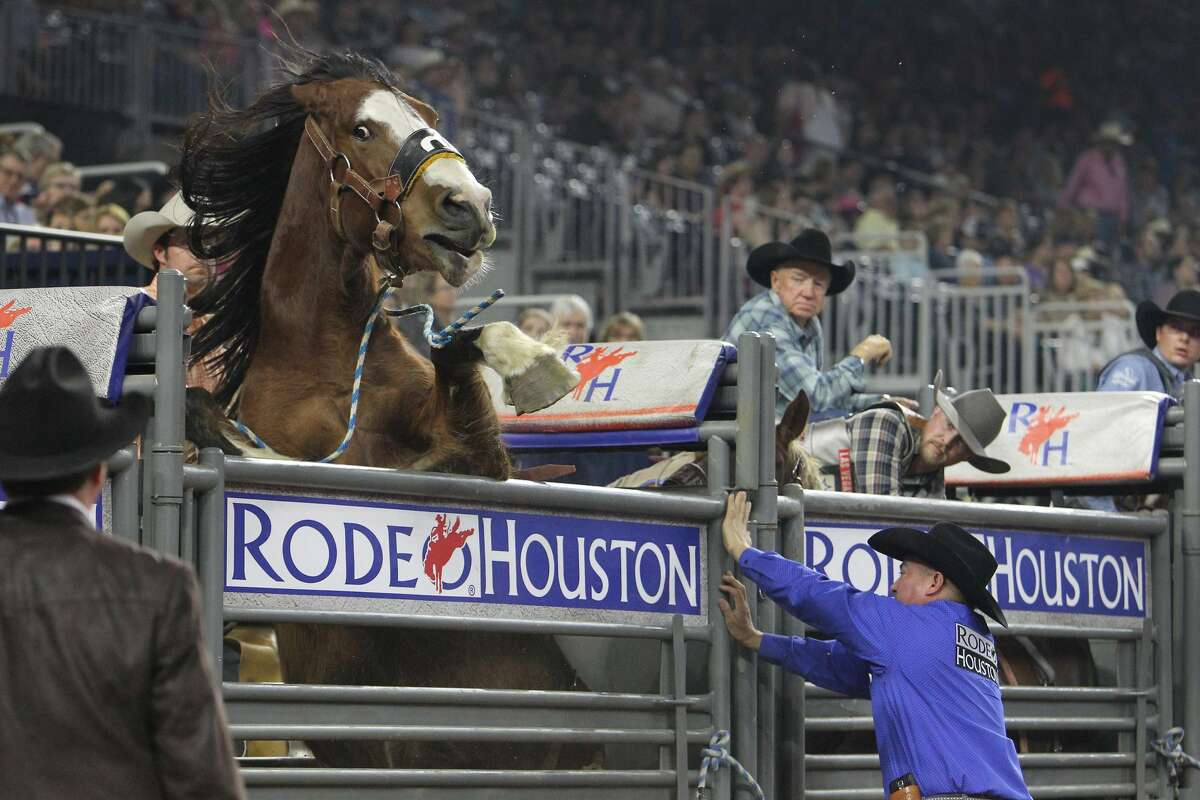 A horse is eager for action during the Super Series IV, Championship Round Saturday, March 18, 2017, in Houston. ( Steve Gonzales / Houston Chronicle )