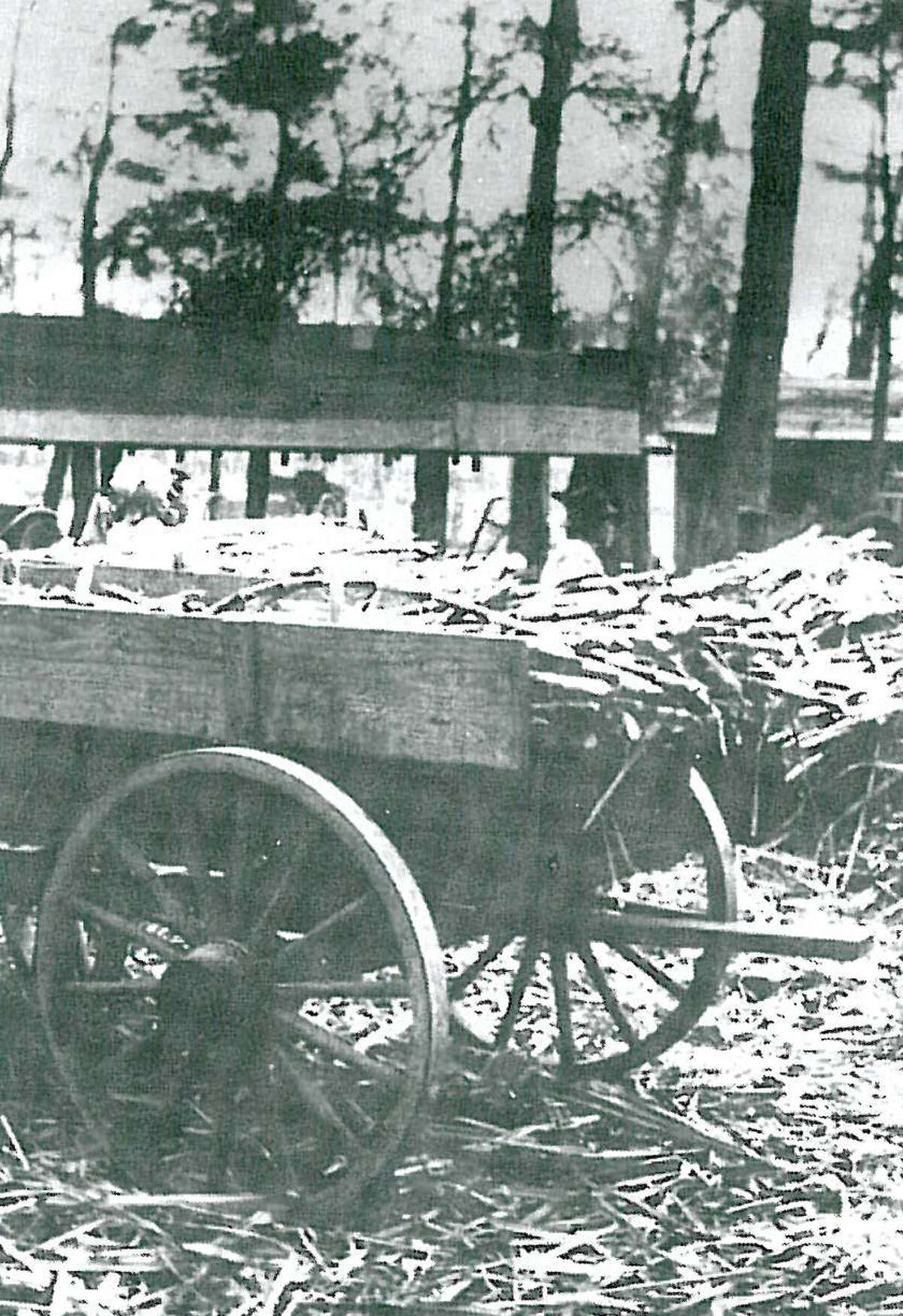 """Sugar cane being brought to a sugar cane mill. Bill Fritch of Magnolia brought his sugar cane to the sugar cane mill on Lake Creek between Montgomery and Magnolia around 1920. Photo from """"Montgomery County: Picture of a Dream Coming True"""" courtesy of Celeste Graves."""