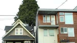 A 2007 single family house next to a new multi-family building in Ballard.(Genna Martin, seattlepi.com)