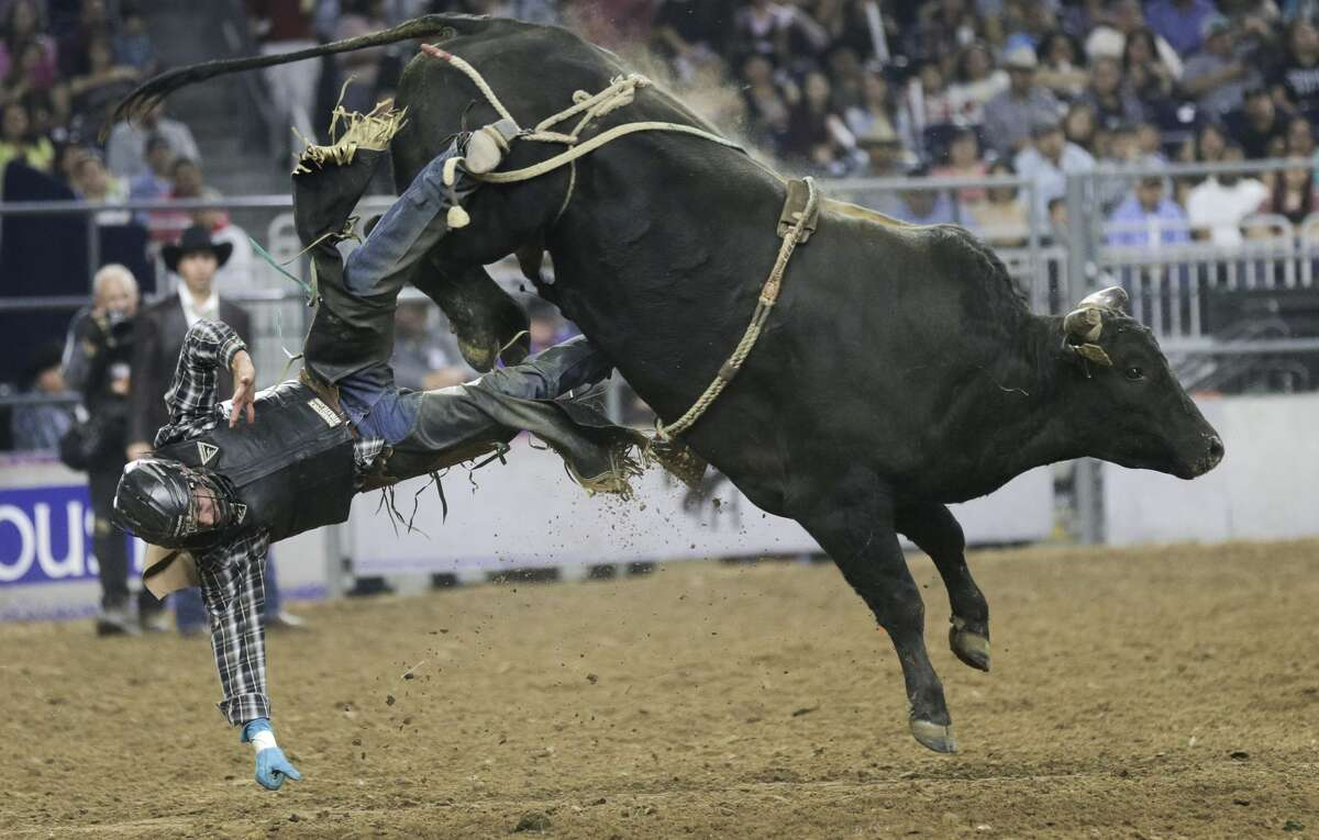 Bull rider Clayton Foltyn falls off of Lost Highway during the Houston Rodeo on Sunday, March 19, 2017, in Houston. ( Elizabeth Conley / Houston Chronicle )