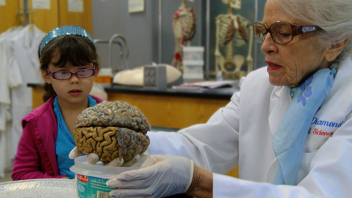 """Dr. Marian Diamond and Indigo Prasad, age 4, who is seeing a human brain for the first time. """"My Love Affair With the Brain: The Life and Science of Dr. Marian Diamond"""" will have its world television premiere on KQED on Wednesday, March 22"""