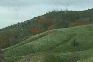 Along a stretch of Interstate 5 known as the Grapevine, the Tehachapi Mountains are covered in bright orange patches of California poppies on March 19, 2017.