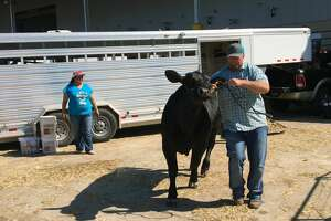 Jimmy Digby, with Scurry County 4-H, leads a steer out of a trailer Monday, March 20, 2017, at the Houston Livestock Show and Rodeo.   The steer will participate in the Junior Market Steer Show.
