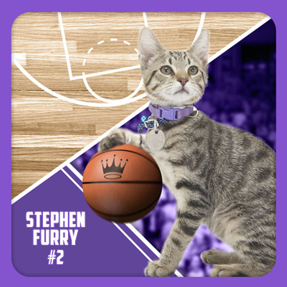 The kitten basketball championship 'Meow Madness' will be airing on the Hallmark Channel on April 3. Photo: Hallmark Channel/Courtesy