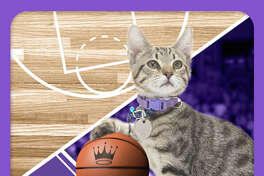 The kitten basketball championship 'Meow Madness' will be airing on the Hallmark Channel on April 3.