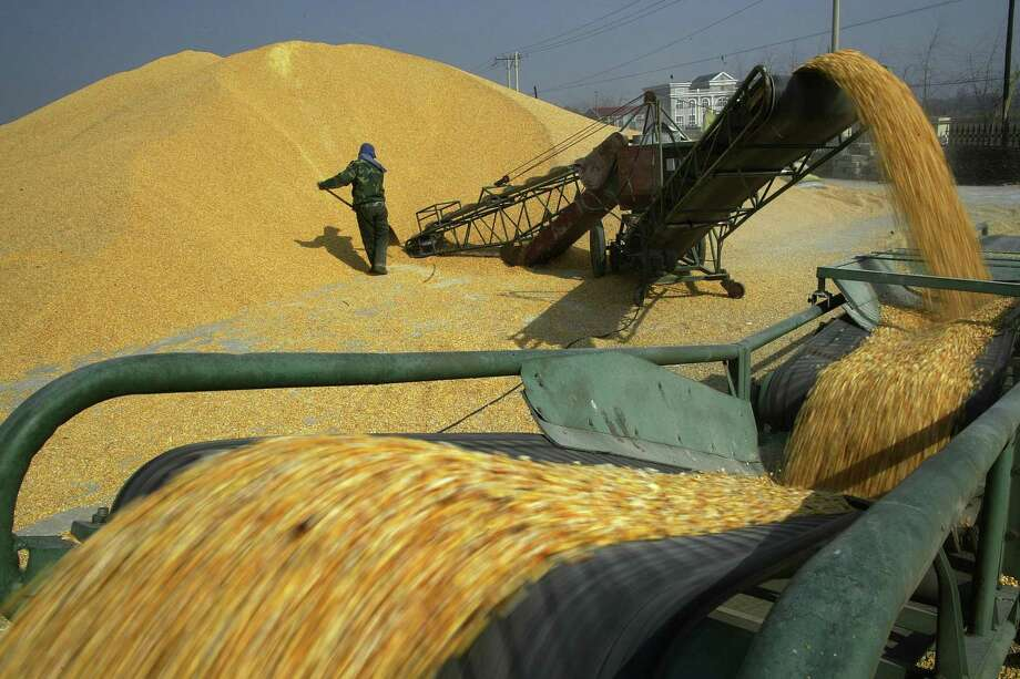 A worker shovels corn grains at a warehouse in Shenyang in northeast China's Liaoning province. An American business group appealed to China on Tuesday to ease import restrictions on agricultural goods including genetically modified seeds and other biotechnology, highlighting complaints Beijing blocks market access despite its vocal support for free trade. Photo: Chinatopix / Chinatopix