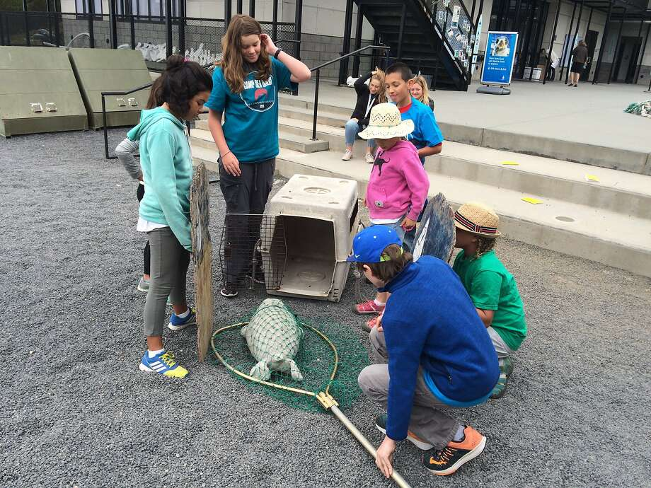 Campers learn how to care for sea lions during SeaQuest, the summer camp from the Marine Mammal Center.
