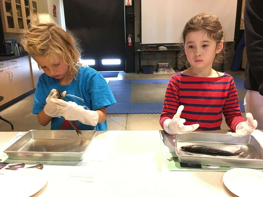 Students learn about marine wildlife at Camp SeaQuest held at the Marine Mammal Center.