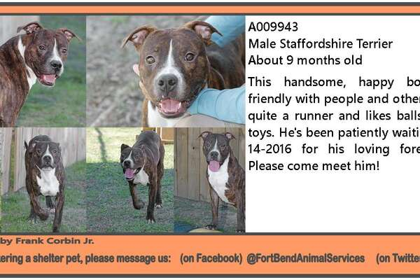 Fort Bend Animal Services