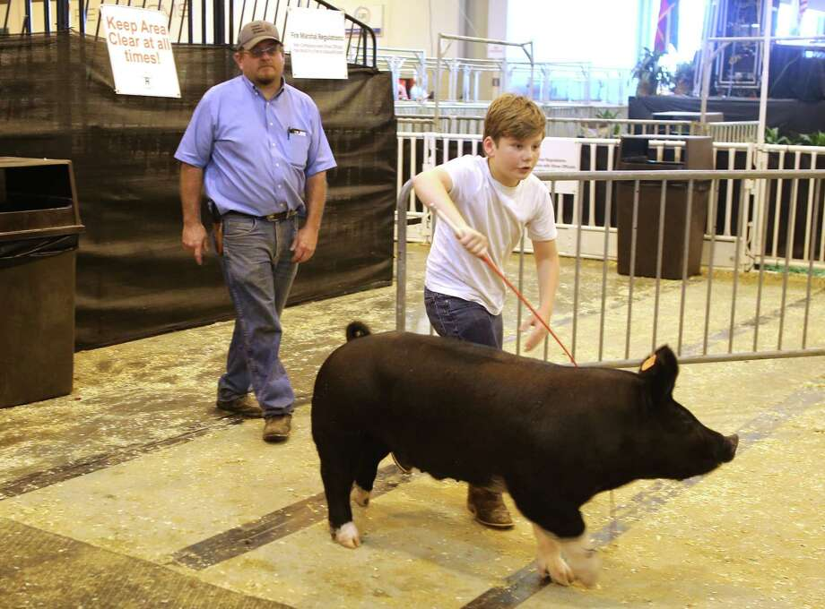 With his father, Bob, behind him, 11-year-old Jarrett White tries to corral a pig at the Houston Livestock Show and Rodeo. Photo: Mark Mulligan / Houston Chronicle / 2017 Mark Mulligan / Houston Chronicle