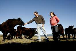Bill Niman and his wife, Nicolette, with their cows in Bolinas, Calif., on January 29, 2009. Bill Niman founded Niman Ranch meat company.